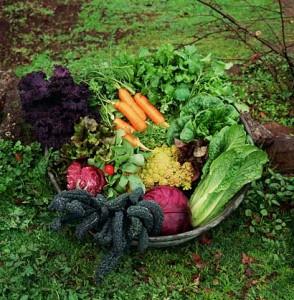 Fall Garden Basket