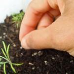 Heirloom Seeds Give Us Resiliency