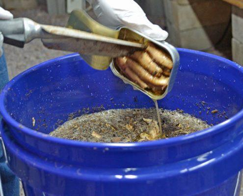 Adding Sardines