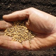 Handful of seed