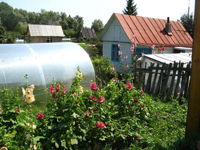 Dacha Gardening