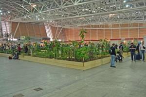 1,000 Gardens in Africa Display