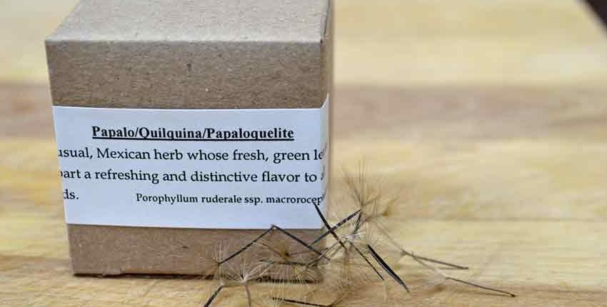 Papalo Seed Box