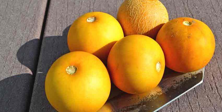 Ripe Vine Peach Melons
