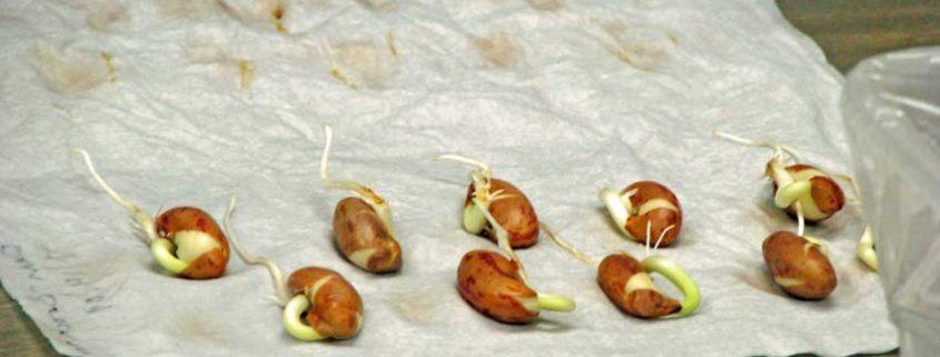 Seed Germination at Seed Savers Exchange