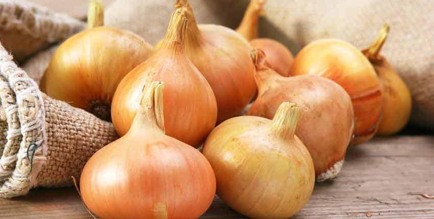 Stuttgarter Spring Onions