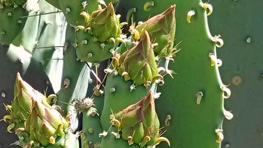 Ethel M Botanical Cactus Garden | Terroir Seeds