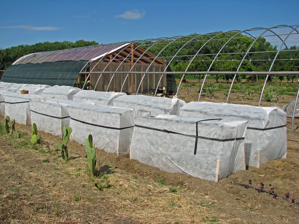 Tomato Isolation Cages