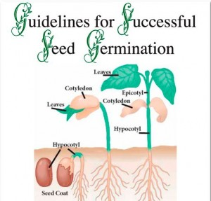 Germination Guide