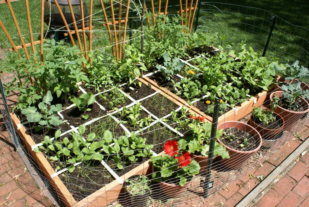 Why Grow Your Own Food Square Foot Heirloom Vegetable Garden