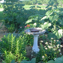 Linda's Garden, NE