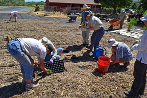 Planting Milkweed is a Team Effort