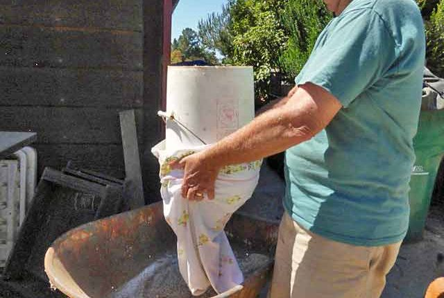 Processing White Sonora Wheat
