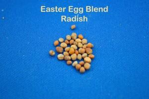 Round Radish Seed