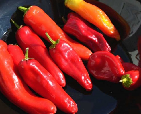 Hungarian Hot Wax Pepper