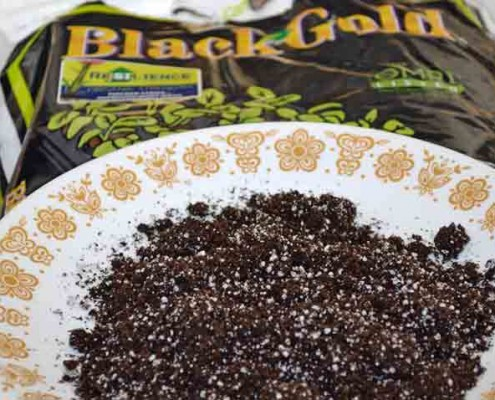 Black Gold Seed Starting Mix Closeup