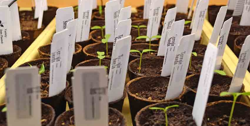 Miracle Gro Pepper Seed Germination