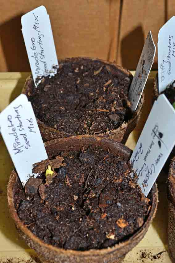Miracle Grow Seed Germination