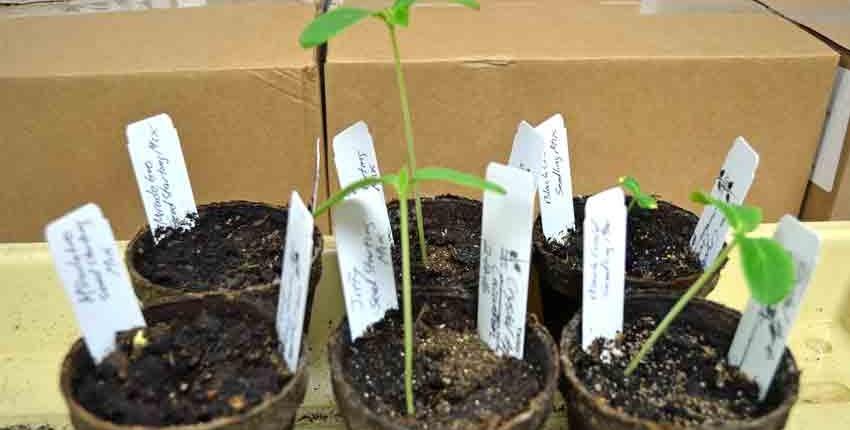 Seed Starting MIxes Germination