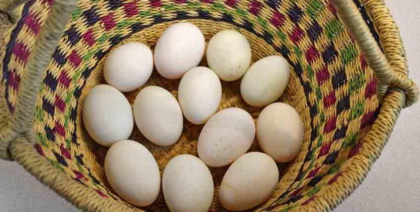 Duck Eggs for Mayonnaise