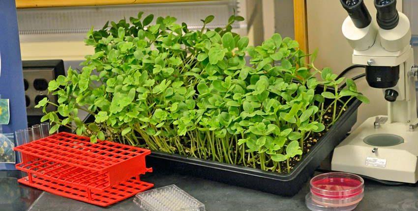 Seed Vigor Testing