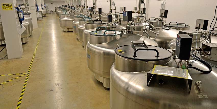 USDA NCGRP's liquid nitrogen vault