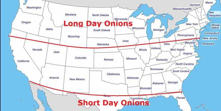 Long vs Short Day Onions Map