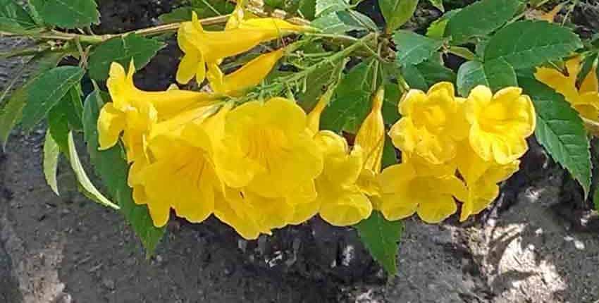 Flower Blooms - Ethel M Botanic Garden