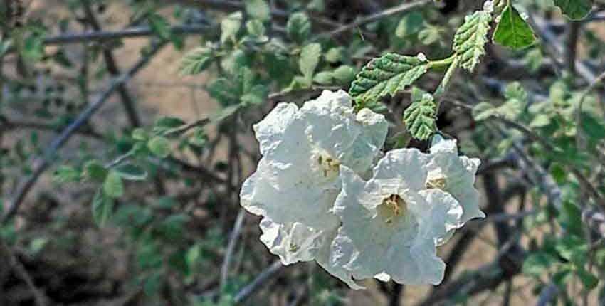 Flower Closeup - Ethel M Botanic Garden