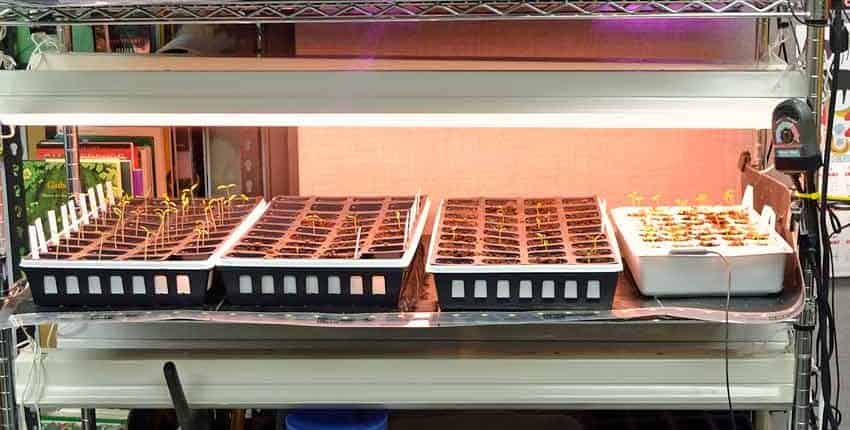 Seed Starting Station